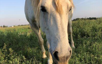 Moment de complicité et de confiance pour la beauté de nos chevaux