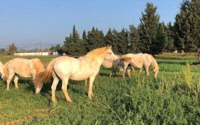 La santé de notre cheval par les plantes