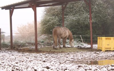L'adaptation du cheval contre le froid